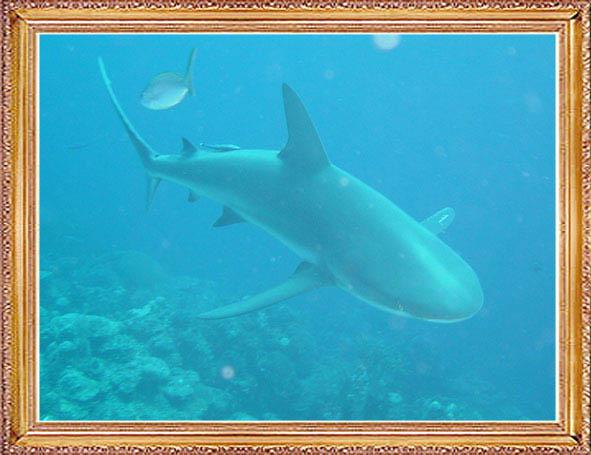 Steven-Dives-with-Sharks-59