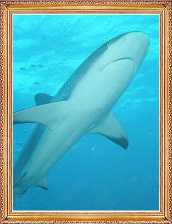 Steven-Dives-with-Sharks-60
